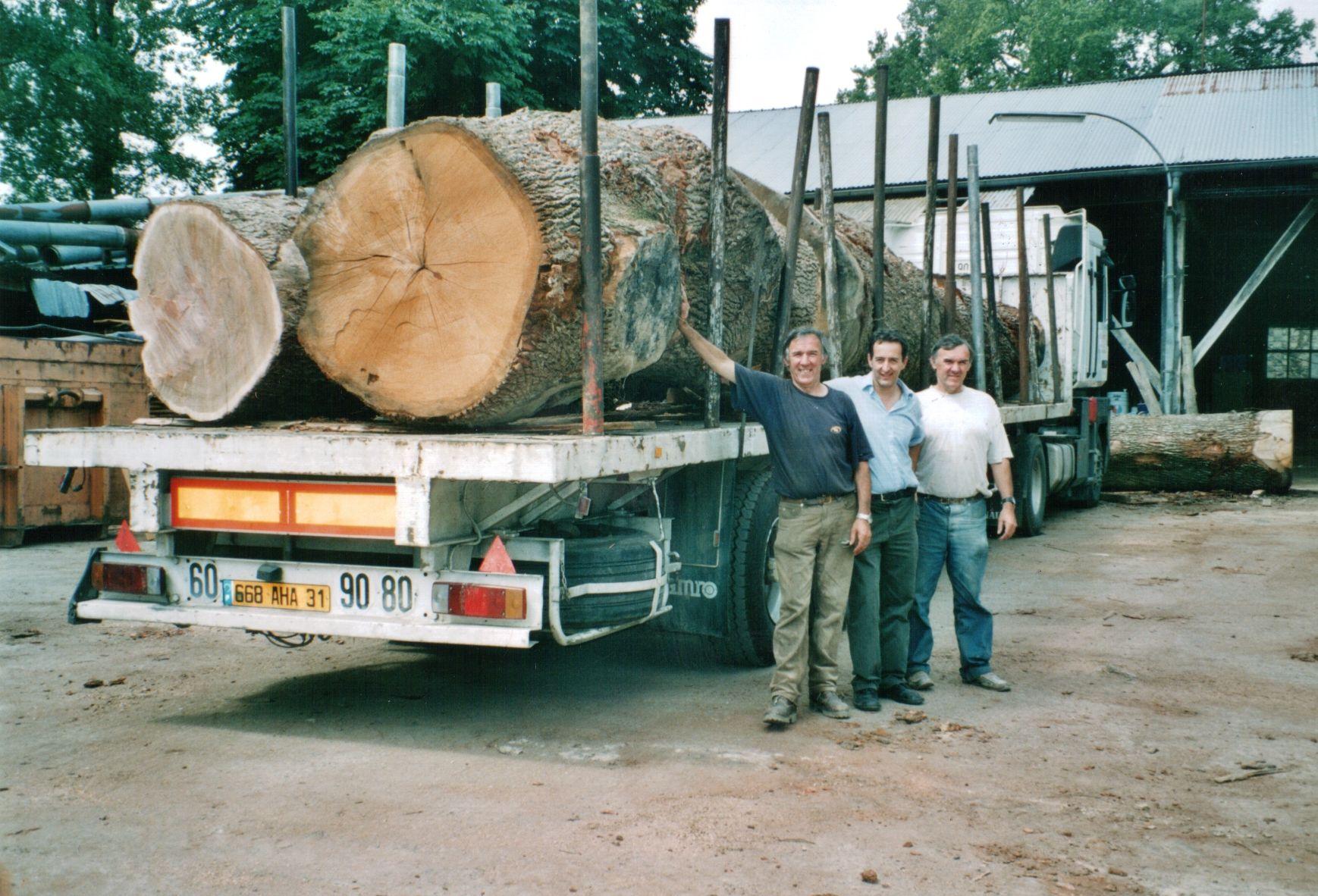 Les gros chênes de 2004